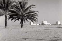 arabian_big2