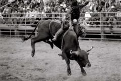 cowboy_big14